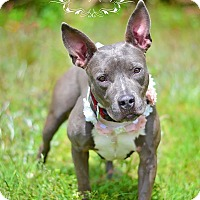 Adopt A Pet :: Freya - Fort Valley, GA