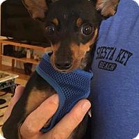 Adopt A Pet :: Zeek - Sarasota, FL