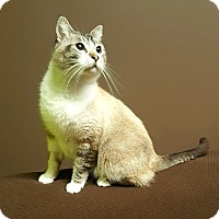 Adopt A Pet :: BIGGIE - Los Angeles, CA