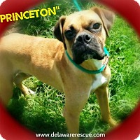 Adopt A Pet :: Princeton (Pending Adoption) - Seaford, DE