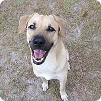 Adopt A Pet :: Obie - Umatilla, FL