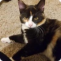 Adopt A Pet :: Tori - Princeton, MN