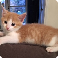 Adopt A Pet :: Gabriel - Denver, NC