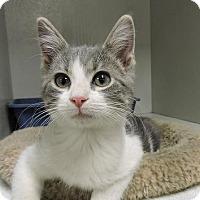 Adopt A Pet :: Peter - Massapequa, NY