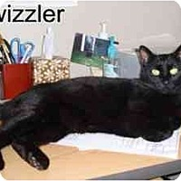 Adopt A Pet :: Twizzler - Milwaukee, WI