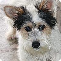 Adopt A Pet :: Ruben - Edmonton, AB