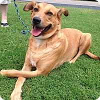 Adopt A Pet :: Henley - Knoxville, TN