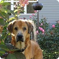 Adopt A Pet :: Linus - Cleveland, OH