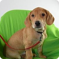 Adopt A Pet :: Wilbur - Minneapolis, MN