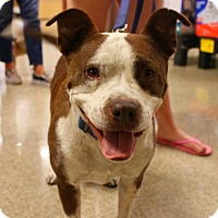 Adopt A Pet :: Buddy - Yuba City, CA