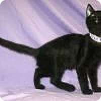 Adopt A Pet :: Kizzie - Powell, OH