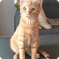 Adopt A Pet :: Ezra - Brooklyn, NY