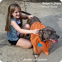 Adopt A Pet :: Snickers - Toms River, NJ