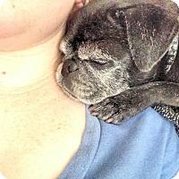 Adopt A Pet :: Jackie - Austin, TX