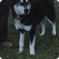 Adopt A Pet :: ALPINE - Cadiz, OH