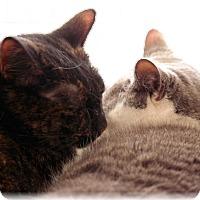 Adopt A Pet :: Lulu & Miranda - Commack, NY