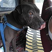 Adopt A Pet :: Clyde in FL - Mira Loma, CA