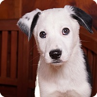Adopt A Pet :: Robby - Sudbury, MA