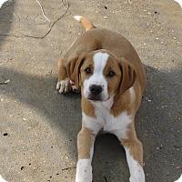Adopt A Pet :: Tonka - Groton, MA