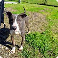 Adopt A Pet :: Brian - Choudrant, LA