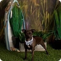 Adopt A Pet :: Tucker - Mesa, AZ
