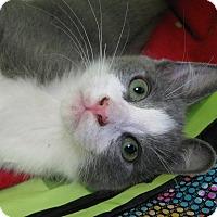 Adopt A Pet :: OTTO - Brea, CA