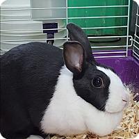 Adopt A Pet :: Carly - Pottsville, PA