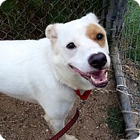 Adopt A Pet :: Desiree - Austin, TX
