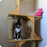 Adopt A Pet :: Sasha - Gardnerville, NV