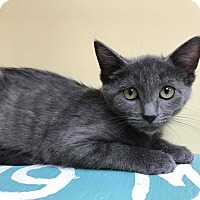 Adopt A Pet :: Justice - Maryville, MO