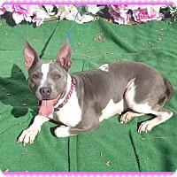 Adopt A Pet :: IRIS-see video - Marietta, GA