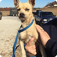 Adopt A Pet :: Brumby - reduced fee! - Washington, DC