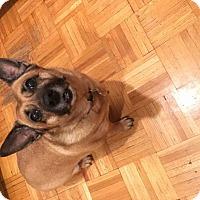 Adopt A Pet :: Lily - Lomita, CA