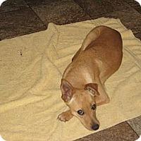 Adopt A Pet :: Candy - Salem, NH