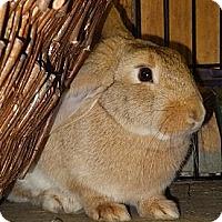 Adopt A Pet :: Gracie - Foster, RI