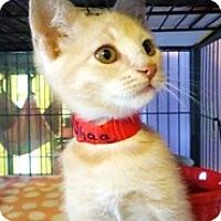 Adopt A Pet :: Shaq - Shelton, WA
