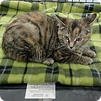 Adopt A Pet :: Aubrey - Sterling Hgts, MI