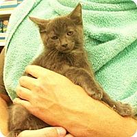 Adopt A Pet :: Tanner - Reston, VA