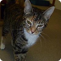 Adopt A Pet :: Natalie - Hamburg, NY