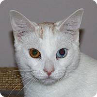 Adopt A Pet :: Diane - North Branford, CT