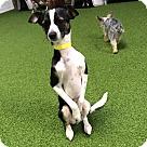 Adopt A Pet :: *URGENT* Eddie