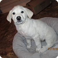 Adopt A Pet :: Arctic - Adopted! - Ascutney, VT