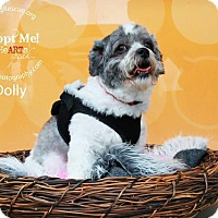 Adopt A Pet :: Dolly - Shawnee Mission, KS