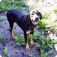 Adopt A Pet :: Lola - Albert Lea, MN