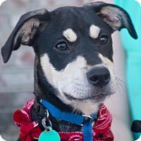 Adopt A Pet :: Dylan $125 - Seneca, SC