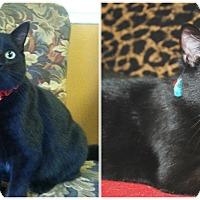 Adopt A Pet :: MOJO - Malvern, AR