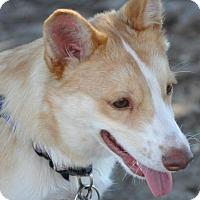 Adopt A Pet :: Amino - Carrollton, TX