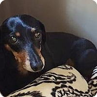 Adopt A Pet :: STELLA - Georgetown, KY
