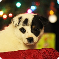 Adopt A Pet :: Primo - Waldorf, MD