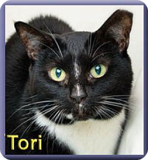 Domestic Shorthair Cat for adoption in Aldie, Virginia - Tori